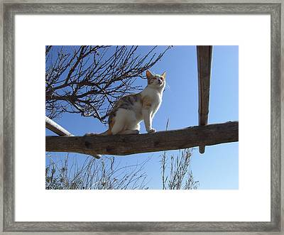 Lisa And Sky Framed Print