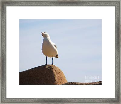 Listen-up Framed Print by Joy Hardee