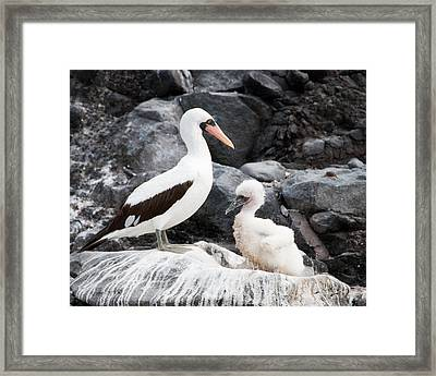 Listen Up Son Framed Print by William Beuther