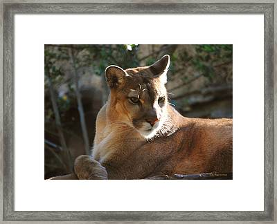 Listening Framed Print by DiDi Higginbotham