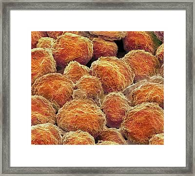 Lithium-ion Crystals Framed Print by Steve Gschmeissner