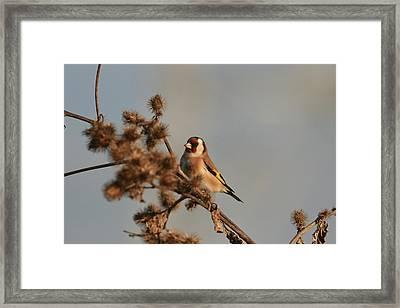 Litle Bird Framed Print by Dragomir Felix-bogdan