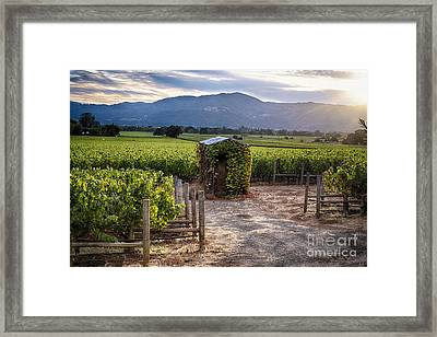 Little Shed In The Vineyard Framed Print by George Oze
