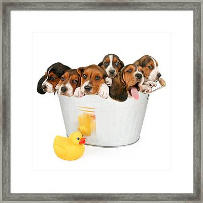 Litter Of Puppies In A Bathtub Framed Print