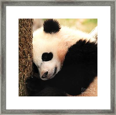 Framed Print featuring the photograph Little Bear's Favorite Tree by Olivia Hardwicke