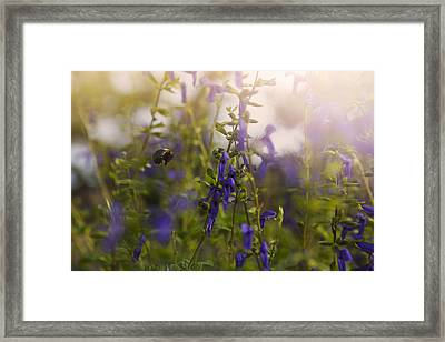 Little Bee In Flight Framed Print