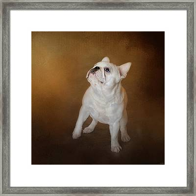 Little Beggar - White French Bulldog Framed Print