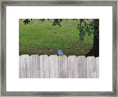 Framed Print featuring the photograph Little Bird by Beth Vincent