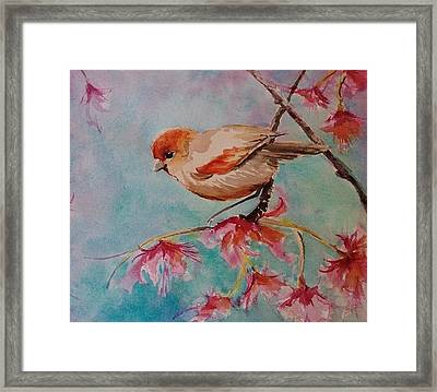 Little Bird  Framed Print