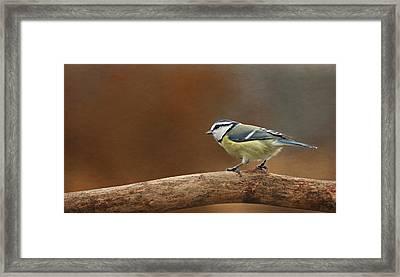 Little Birdie Framed Print by Heike Hultsch