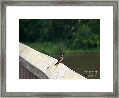 Little Birdie Framed Print by Kevin Croitz