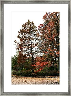 Little Bit Of Red Framed Print by John Rizzuto