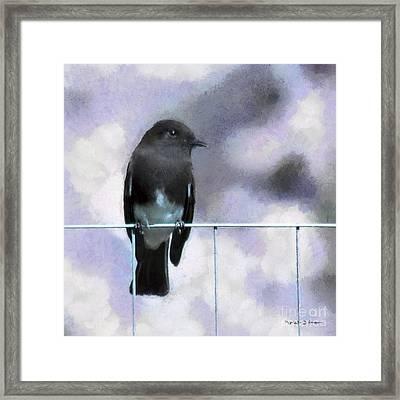 Little Black Phoebe Framed Print by Rhonda Strickland