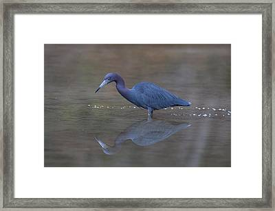 Little Blue Bubbles Framed Print