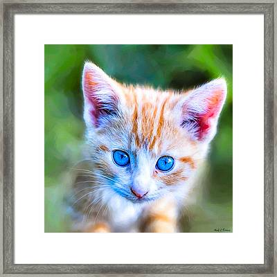 Little Blue Eyes  - Orange Tabby Kitten Framed Print