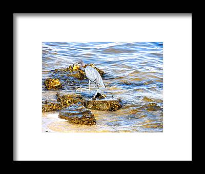 South Hutchinson Island Framed Prints