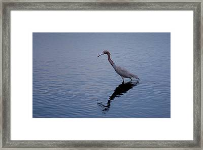 Framed Print featuring the photograph Little Blue Heron On The Hunt by John M Bailey