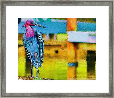 Little Blue Heron Posing Framed Print