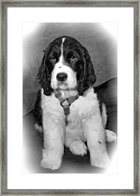 Little Boy Blue Oil Bw Framed Print by Steve Harrington