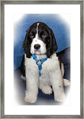 Little Boy Blue Oil Framed Print by Steve Harrington