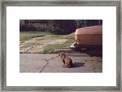 Little Brown Dog Framed Print by John Hines