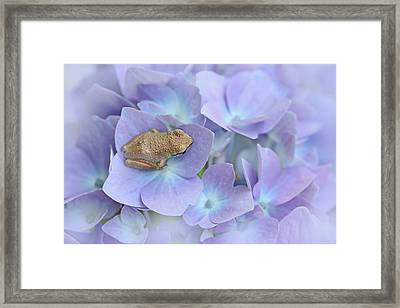 Little Brown Frog On Hydrangea Flower  Framed Print by Jennie Marie Schell