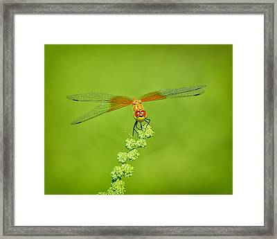 Framed Print featuring the photograph Little Bugger by Greg Norrell