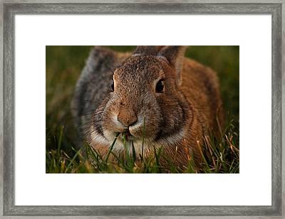Little Bunny Foo Foo Framed Print by Mike Flynn
