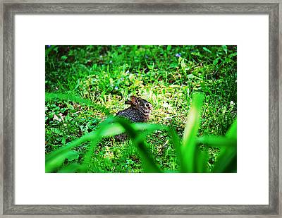 Little Bunny Fufu Framed Print by Mark Russell