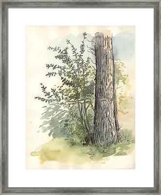 Little Bush Framed Print by Jaimie Whitbread