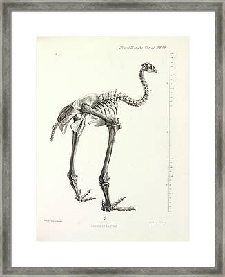 Little Bush Moa Framed Print