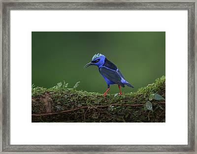 Little But Fierce Framed Print