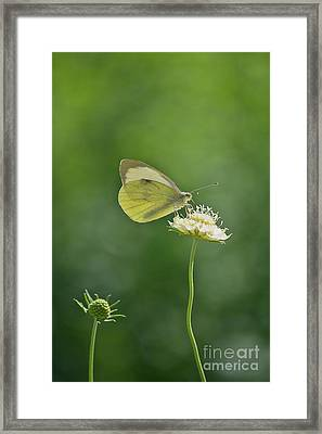Little Butterfly Framed Print by Angela Doelling AD DESIGN Photo and PhotoArt