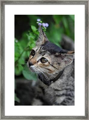 Little Cat  Framed Print by Ahmad Shantosi
