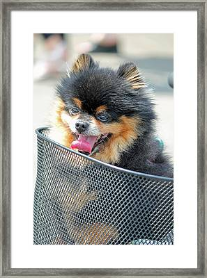 Framed Print featuring the photograph Little Companion by E Faithe Lester
