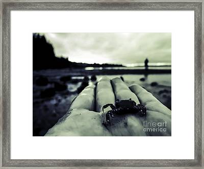 Little Crab 1 Framed Print by Arlene Sundby