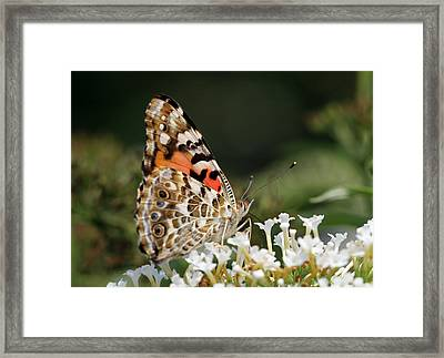 Little Creature Framed Print by Juergen Roth