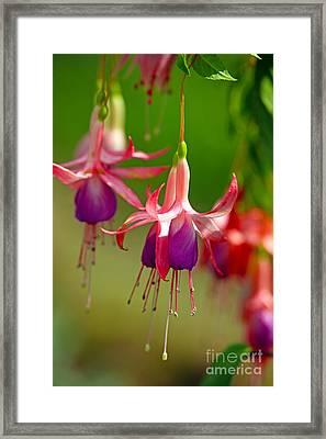 Little Dancers Framed Print by Lynne Sutherland