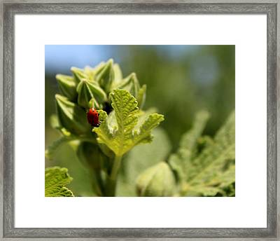 Little Darling Framed Print by Elizabeth Sullivan