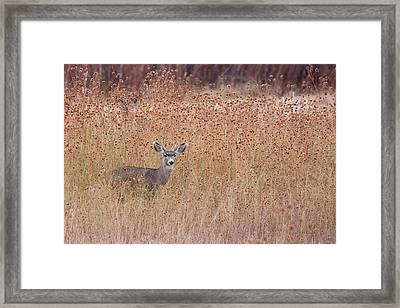 Little Deer Framed Print by Ruth Jolly
