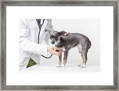 Little Dog At The Vet Framed Print by Edward Fielding