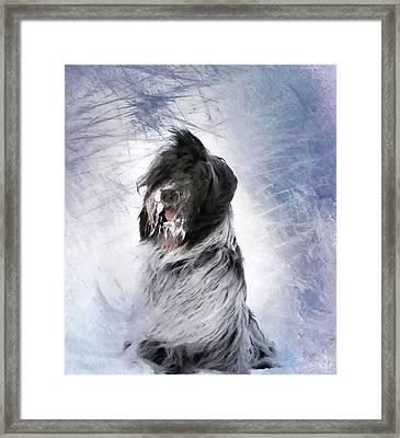 Little Doggie In A Snowstorm Framed Print by Gun Legler