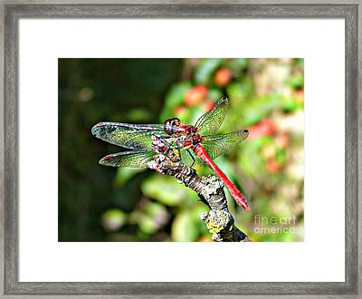 Little Dragonfly Framed Print