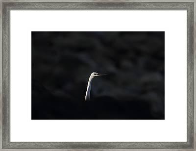 Little Egret Framed Print