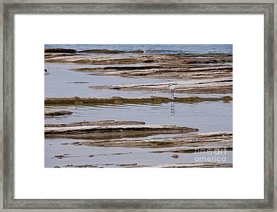 Little Egret Framed Print by Simona Ghidini