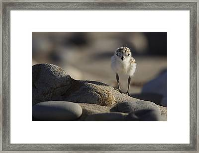 Little Explorer  Mg_0688 Framed Print