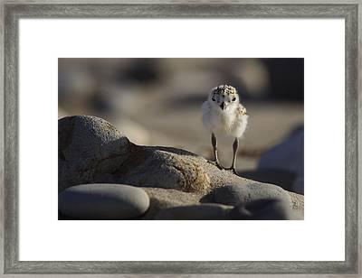 Little Explorer  Mg_0688 Framed Print by David Orias
