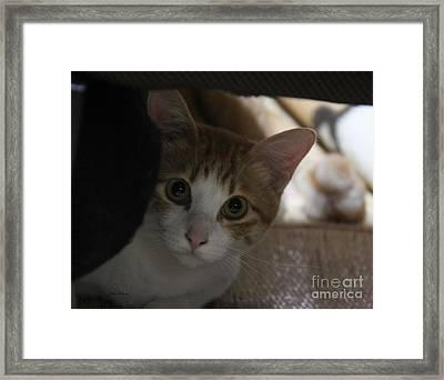 Little Face Framed Print by Yumi Johnson