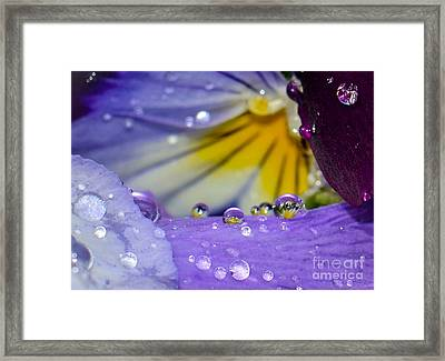 Little Faces Framed Print by Amy Porter