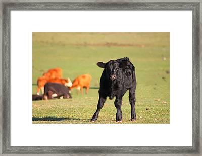 Little Fella Framed Print by Rhonda Humphreys